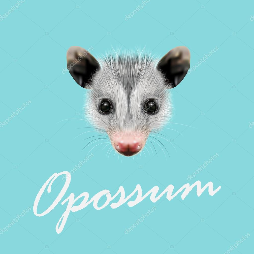 Vector Illustrated Portrait of Opossum.