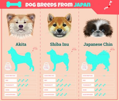 Dogs breed vector infographics types of dog breeds from Japan.
