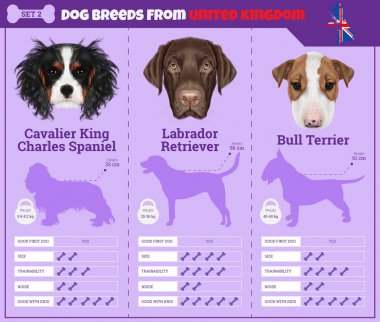 Dogs breed infographics types of dog breeds from United Kingdom.