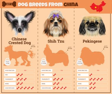Dogs breed vector infographics types of dog breeds from China.