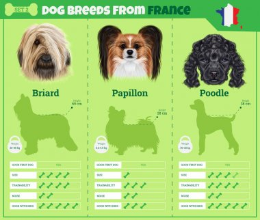 Dogs breed vector infographics types of dog breeds from France