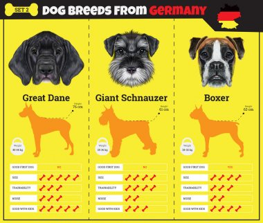 Dogs breed vector infographics types of dog breeds from Germany.
