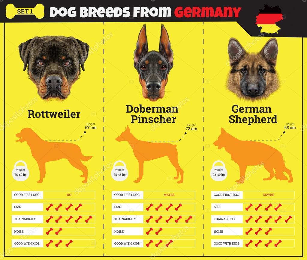 dog breeds See a list of all purebred dog breeds and designer dog breeds that ckc registers.