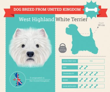West Highland White Terrier dog breed vector infographics