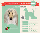 Afghan Hound dog breed vector infographics