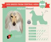 Fotografie Afghan Hound dog breed vector infographics