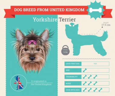 Yorkshire Terrier dog breed vector infographics