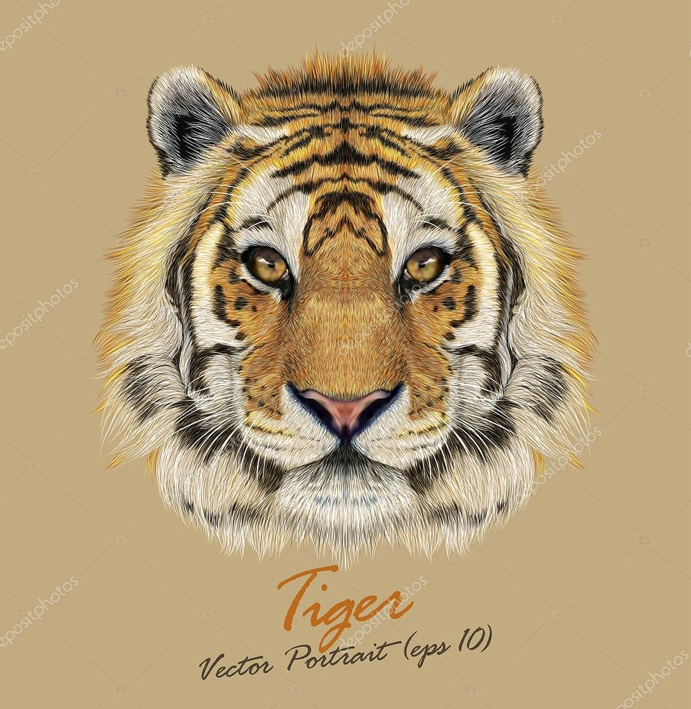 Tiger animal face. Vector Bengal head portrait. Realistic fur beast of tiger. Predator eyes of wildcat. Big cat head on beige background.