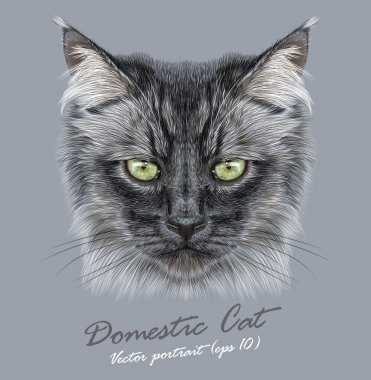 Vector Portrait of Black Siberian domestic cat animal cute face. Vector funny long hair kitten head portrait. Realistic fur portrait of Siberian black kitty isolated on grey background.Domestic Cat.