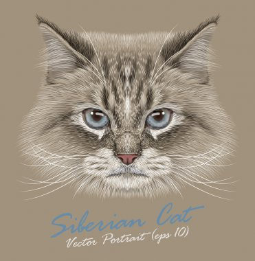 Siberian cat animal cute face. Illustrated funny Neva masquerade colorpoint kitten head portrait. Realistic fur portrait of Siberian blue eyed kitty isolated on beige background.