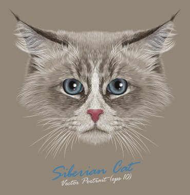 Vector Portrait of Siberian Cat