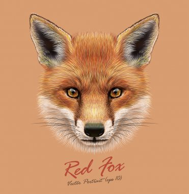 Fox animal face. Vector cute red head. Realistic winter fur red wild fox portrait on orange background.