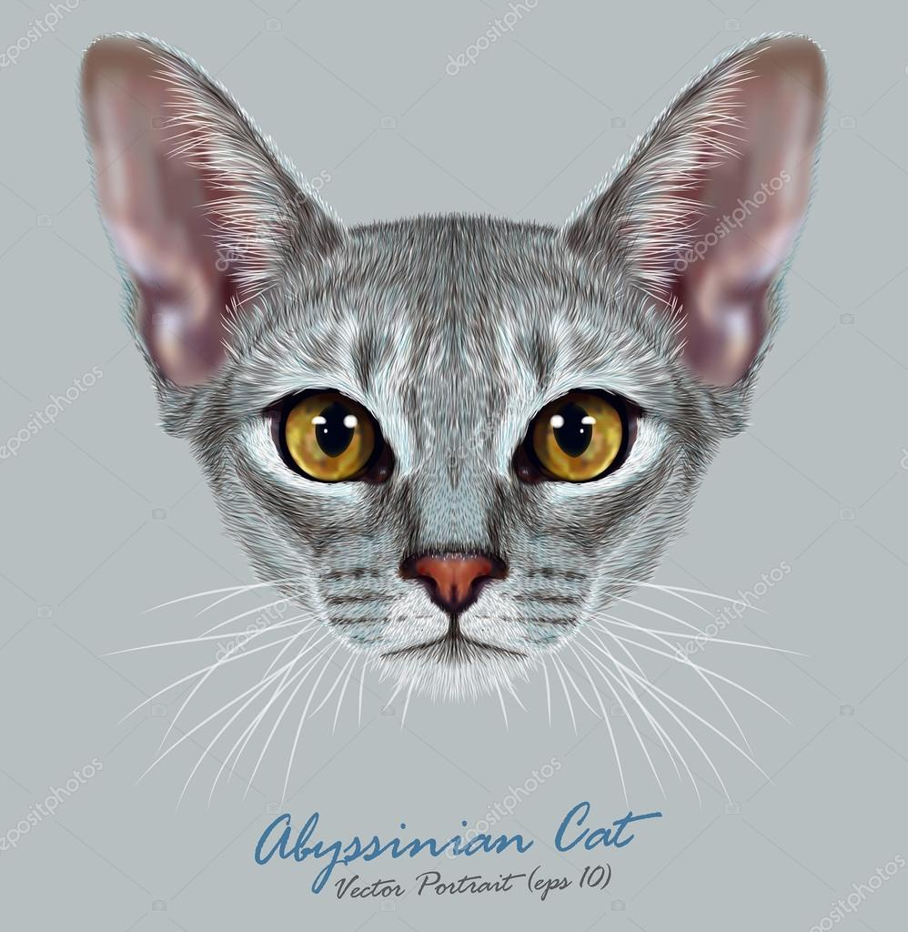 Vector Illustrative Portrait of Abyssinian Cat