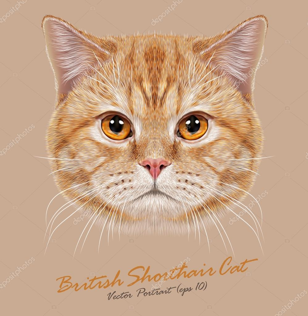 Vector Portrait of Domestic Cat.