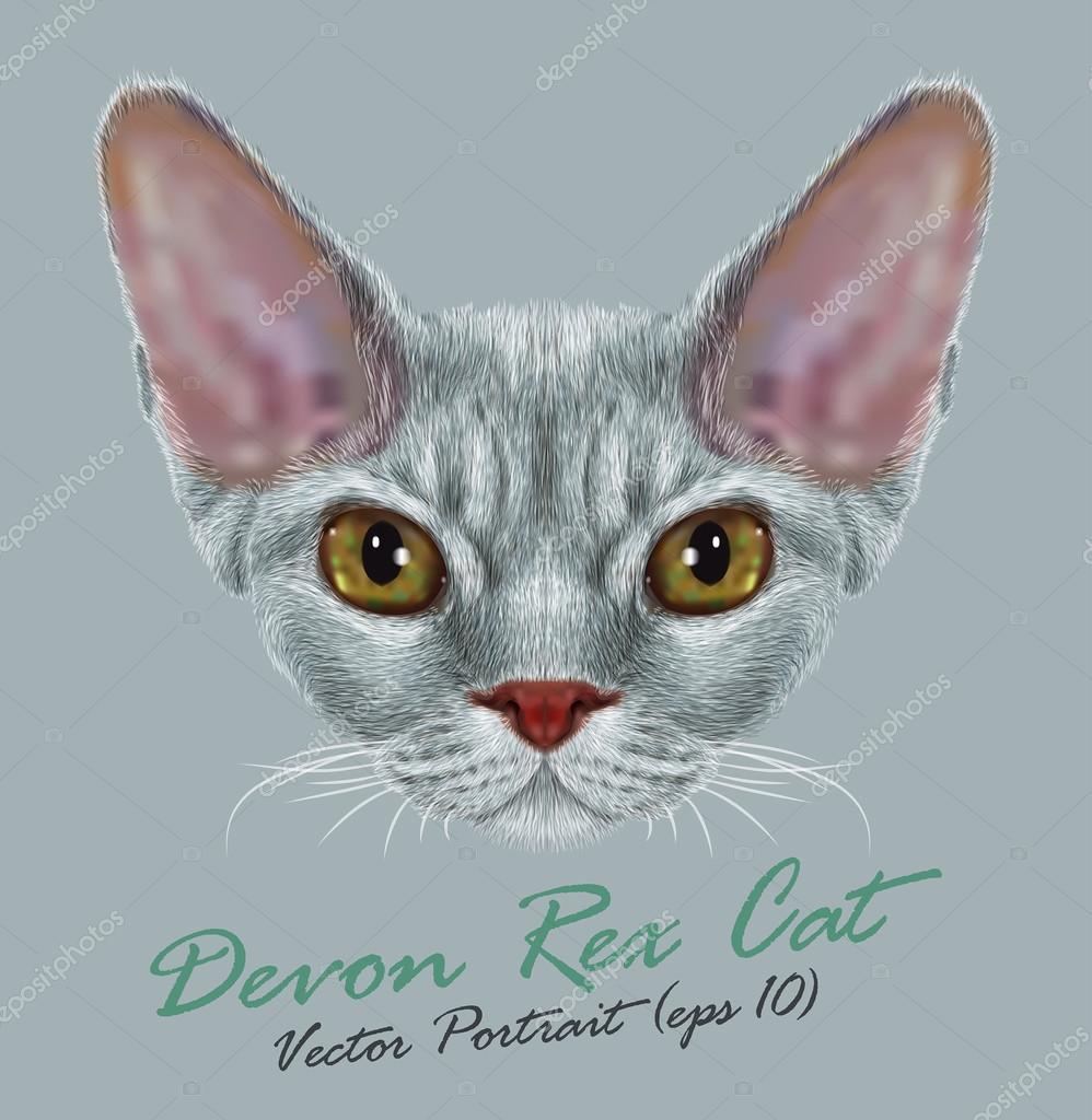 Vector Portrait of Devon Rex Cat