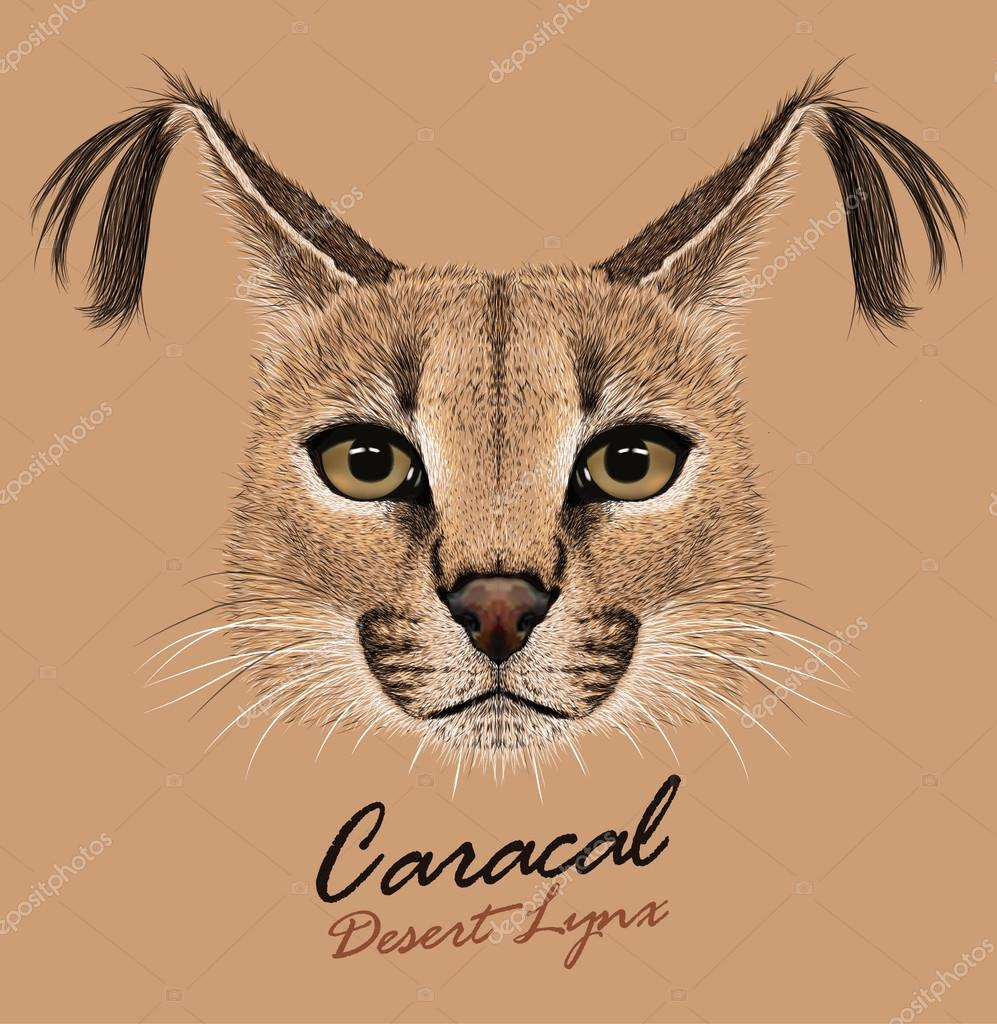 Caracal animal face. Vector African lynx cat head portrait. Realistic fur portrait of exotic caracal medium-sized cat isolated on beige background.