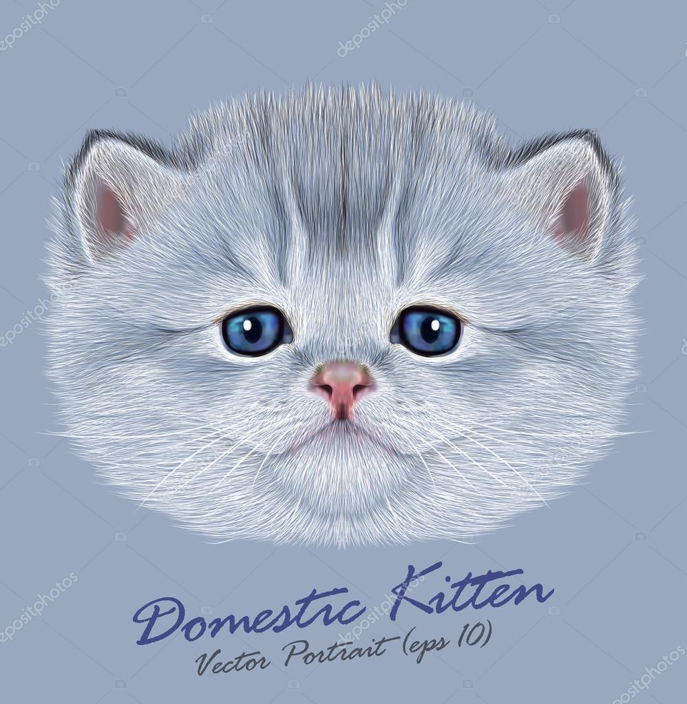 Vector Portrait of Domestic Kitten