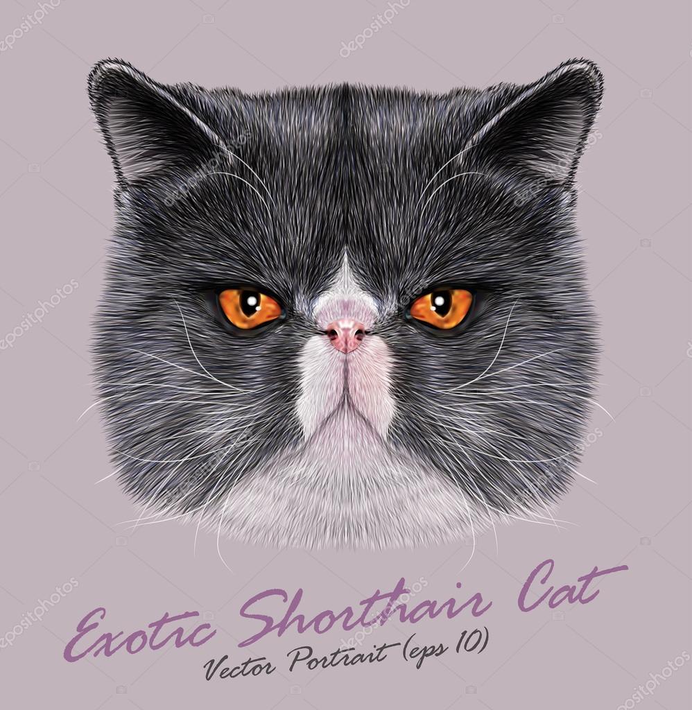 Vector Portrait of Exotic Shorthair Cat