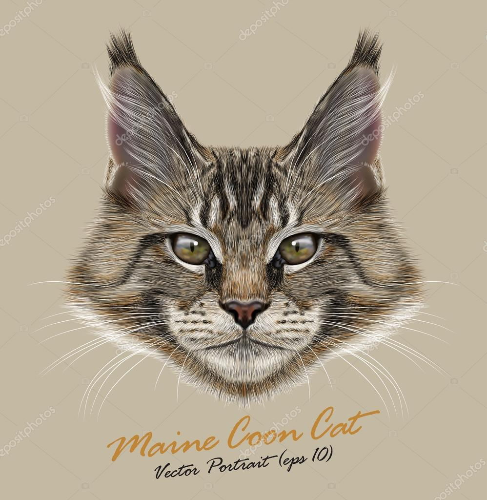 Vector portrait of Maine Coon Cats