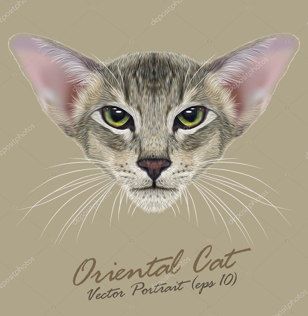 Oriental purebred cat animal cute face. Vector happy tabby oriental kitten head portrait. Realistic fur portrait of oriental green eyes kitty isolated on khaki background.