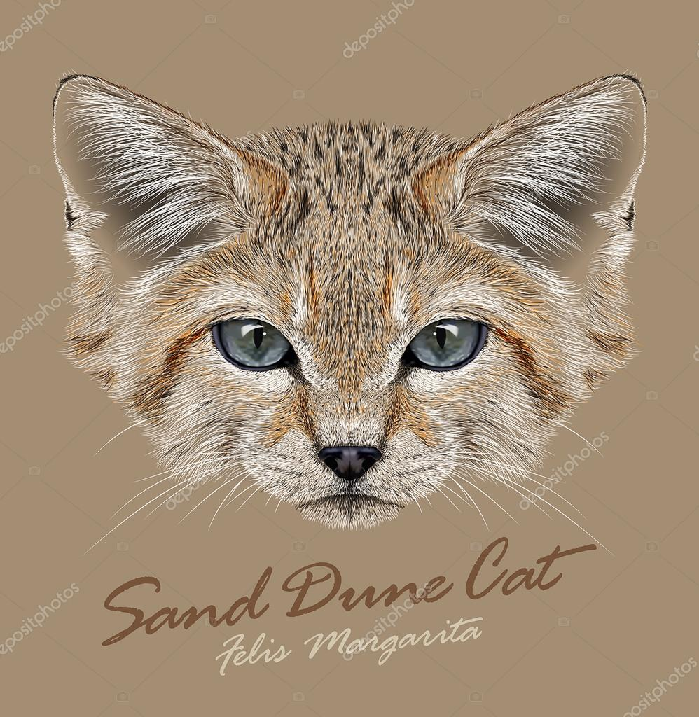 Vector Portrait Sand Dune Cats