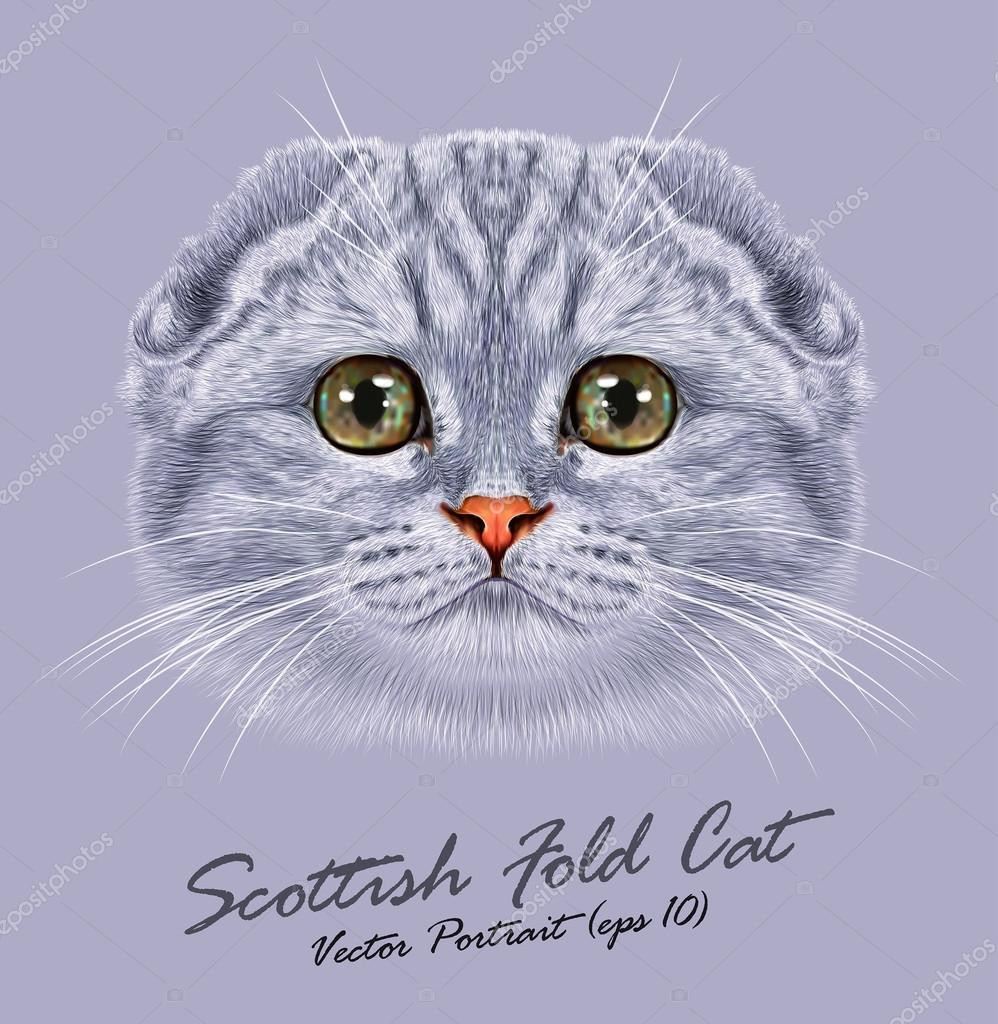 Scottish fold cat animal cute face. Vector happy silver tabby stripe pattern Scottish fold kitten head portrait. Realistic fur portrait of scottish green eyes kitty isolated on grey background.