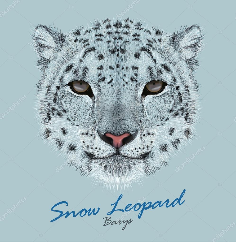 Vector Portrait of a Snow Leopard