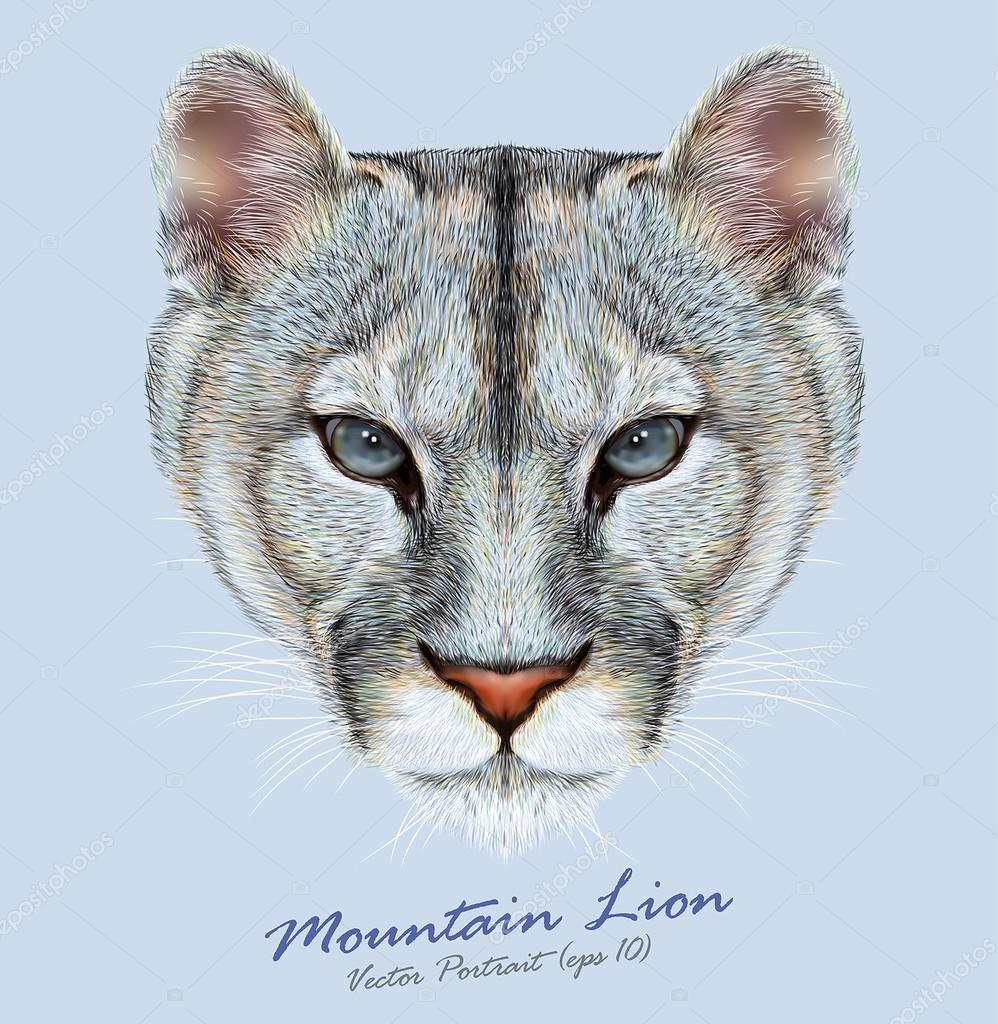 Mountain lion animal cute face. Vector American cougar head portrait. Realistic fur portrait of puma wildcat panther isolated on blue background.