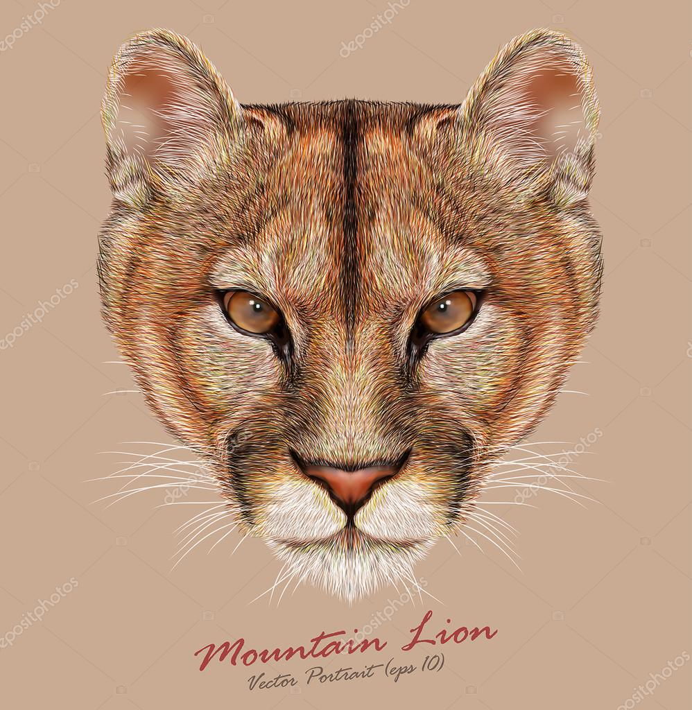 Mountain lion animal cute face. Vector American cougar head portrait. Realistic fur portrait of puma wildcat panther isolated on beige background.
