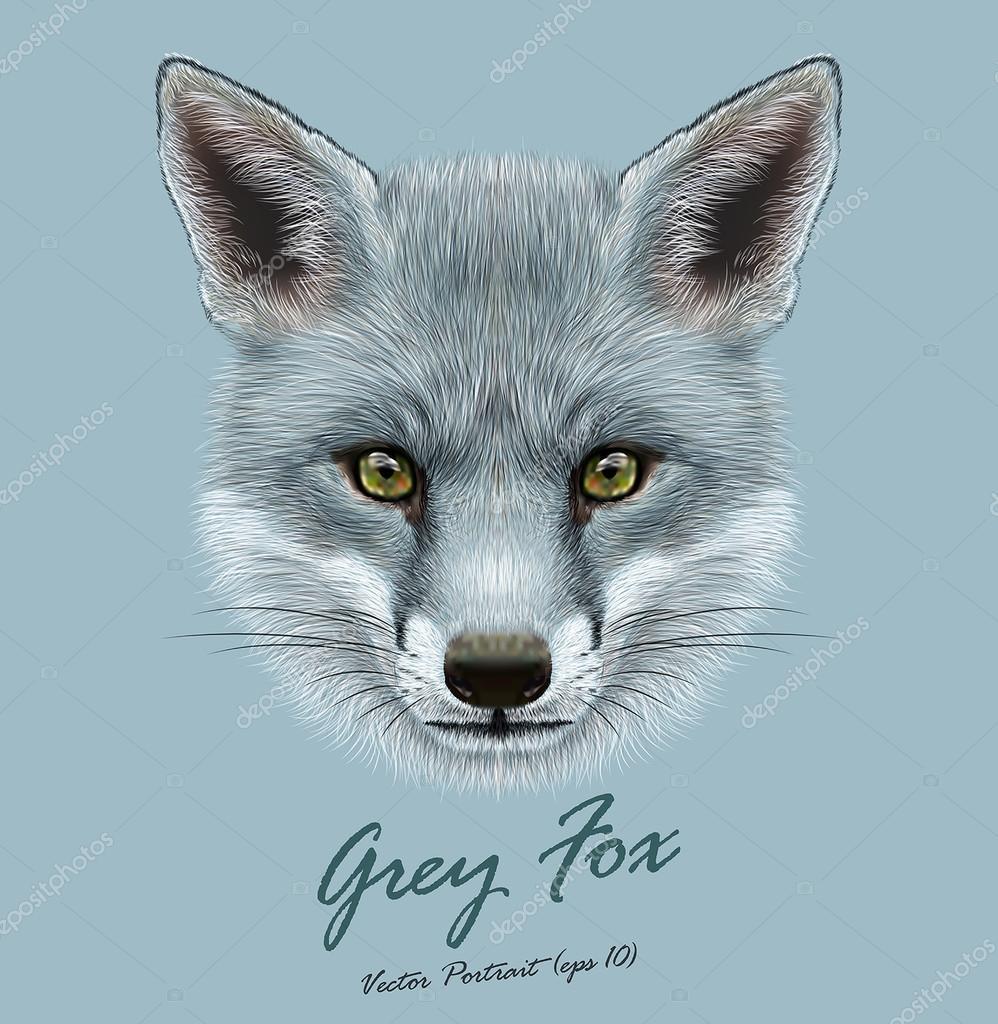 Vector Illustrative portrait of Grey Fox