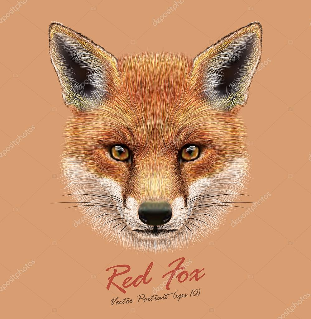 Fox animal face. Vector cute red head. Realistic winter fur red wild fox portrait on orange background.