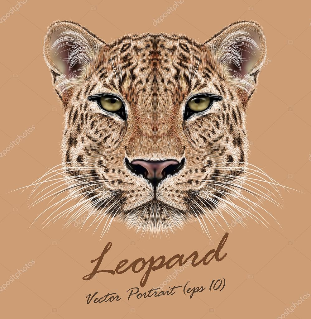 Leopard animal face. Vector African, Asian wild cat head portrait. Realistic fur portrait of exotic leopard isolated on beige background.