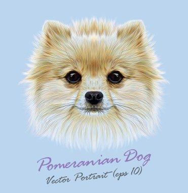 Pomeranian spitz dog animal cute face. Vector funny puppy head portrait. Realistic fur portrait of Pomeranian dog isolated on blue background.