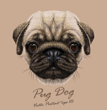 Pug dog animal cute face. Vector funny happy doggy head portrait. Realistic fur portrait of wrinkly pug puppy isolated on beige background.