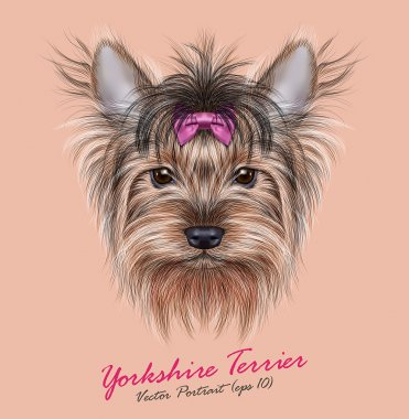 Yorkshire terrier Dog animal cute face. Vector adorable happy Yorkshire girl puppy head portrait with bow accessory. Realistic funny fur portrait of Yorkshire dog isolated on beige background.