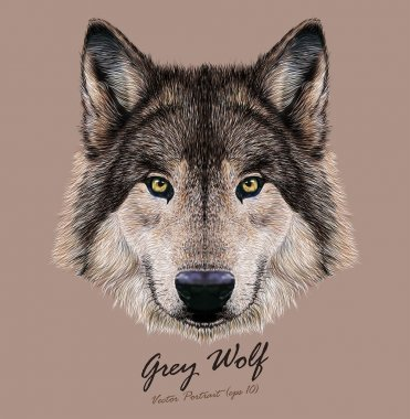 Digital vector Illustration Portrait of a Wolf