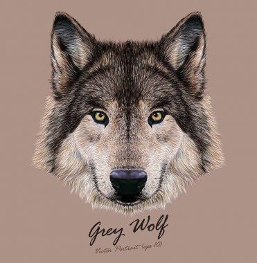 Wolf animal face. Scary grey head. Realistic fur gray wild wolf portrait on beige background.