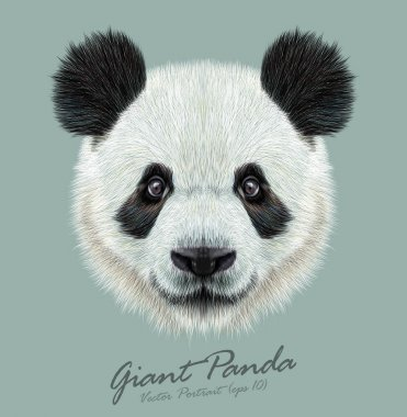 Panda animal cute face. Vector Asian bear head portrait. Realistic fur portrait of bamboo animal on blue background.