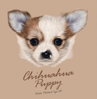 Chihuahua animal dog cute face. Vector brown spotted chihuahua puppy head portrait. Realistic fur portrait of purebred chihuahua doggy on beige background.
