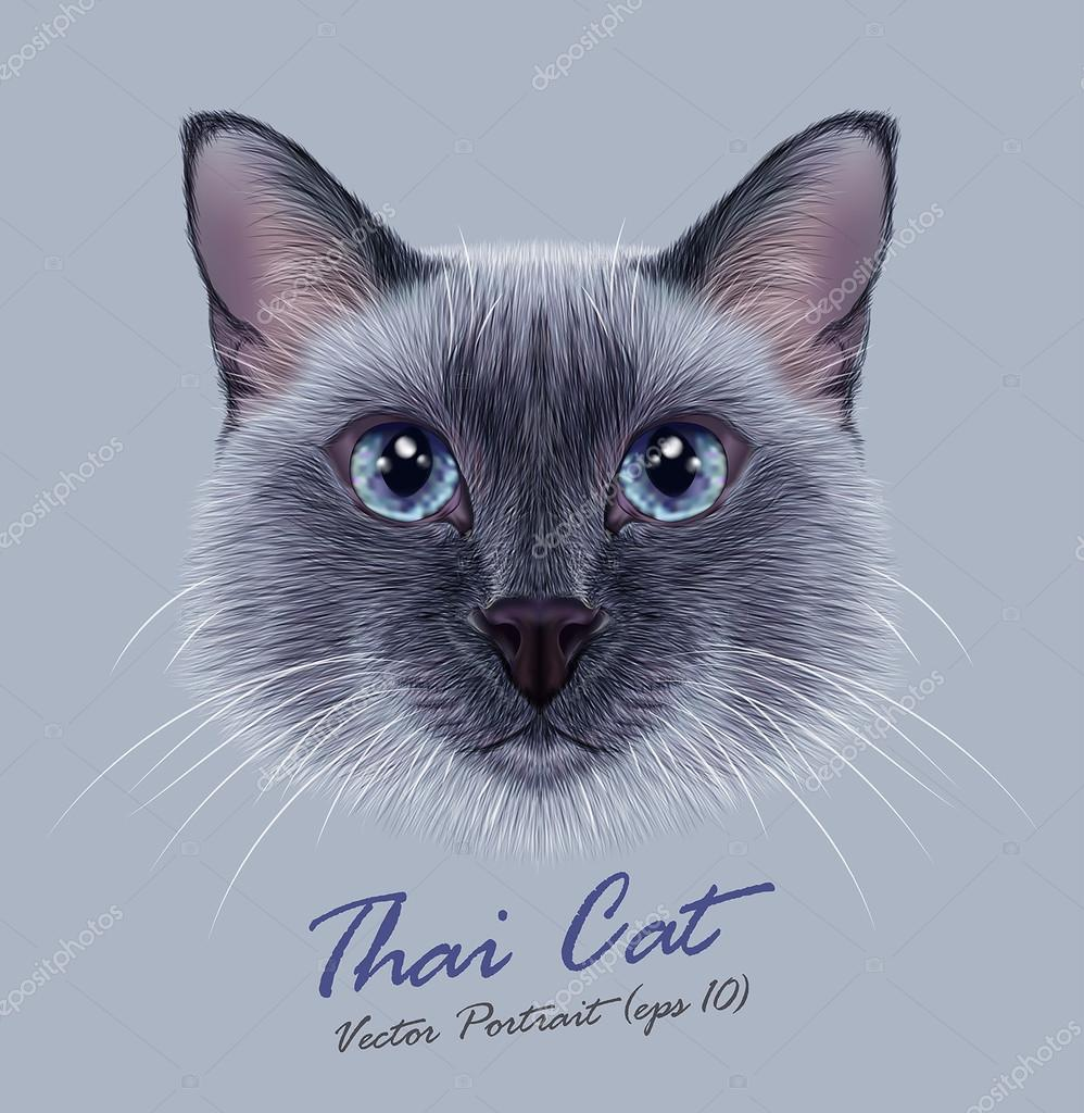 Siamese cat animal cute face. Vector funny happy cat head portrait. Realistic fur portrait of thai blue point kitten isolated on grey background.