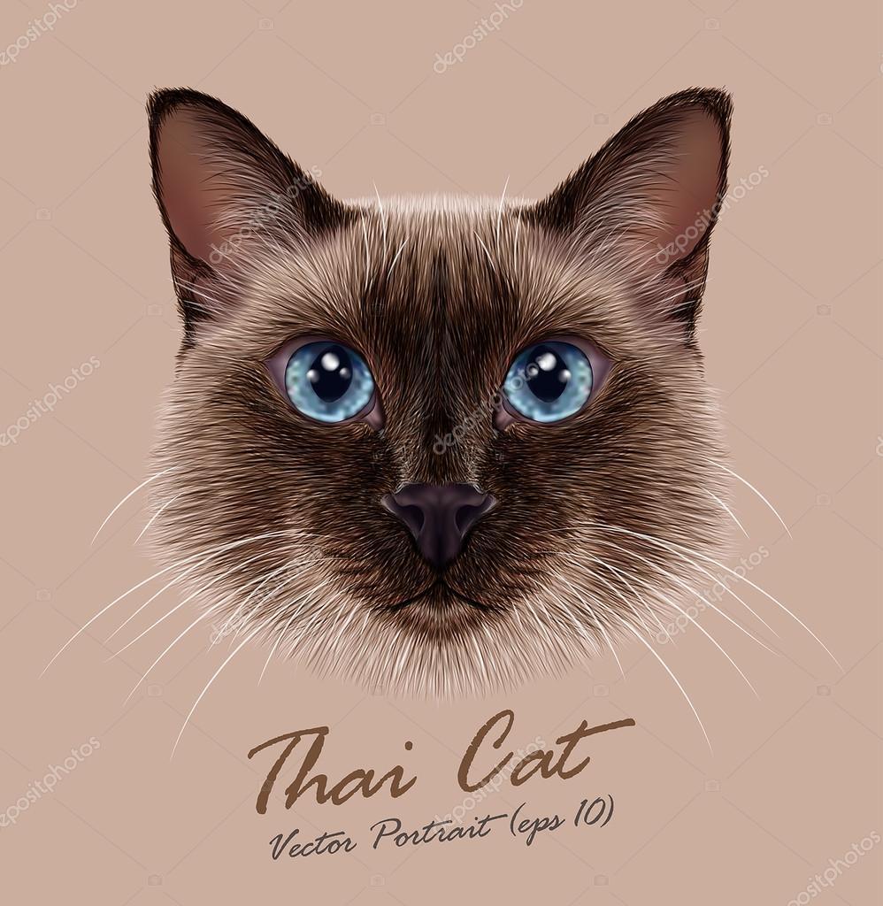 Viso Carino Animale Gatto Siamese Ritratto Della Testa Di Vettore