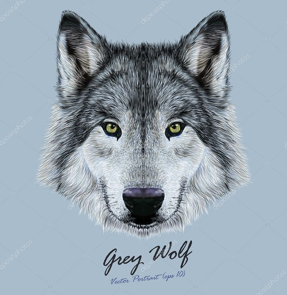 Vector Illustrative Portrait of Wolf