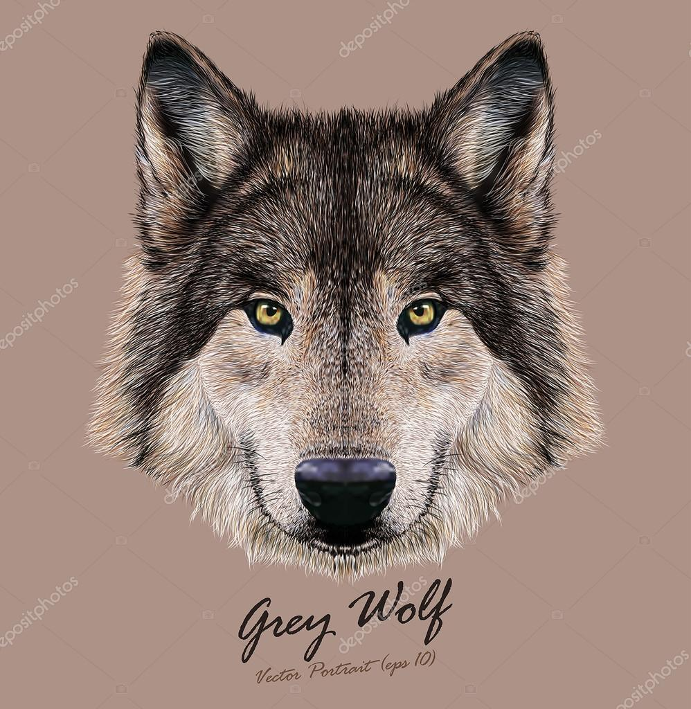 Wolf animal face. Scary grey head. Realistic fur gray wild wolf portrait on beige background.