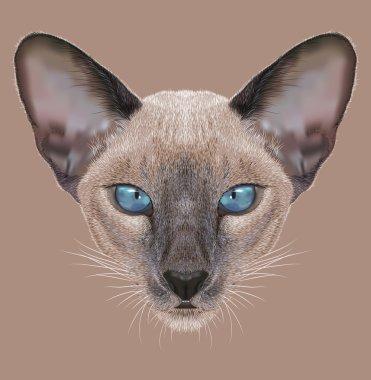 Illustrative Portrait of Siamese Kitten