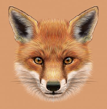 Illustrative Portrait of a Red Fox
