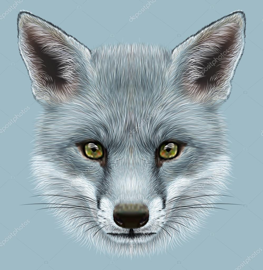 Illustrative Portrait of a Grey Fox