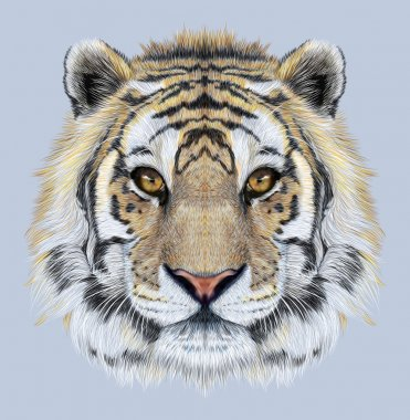 Portrait of a Tiger on blue background.