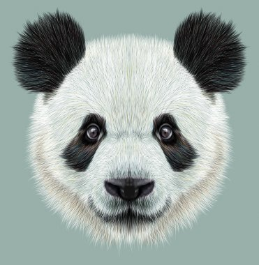 Illustrative portrait of Panda