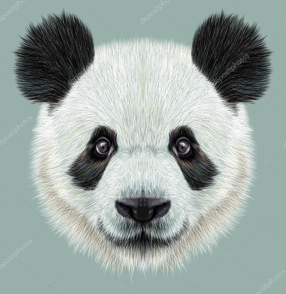 Illustrative portrait of Panda