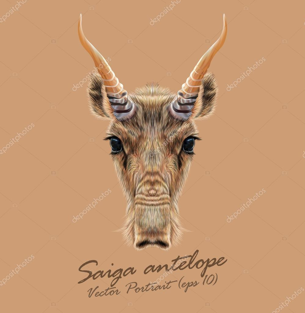 Vector Illustrated Portrait of Saiga antelope.